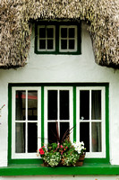 Adare - Window flowers