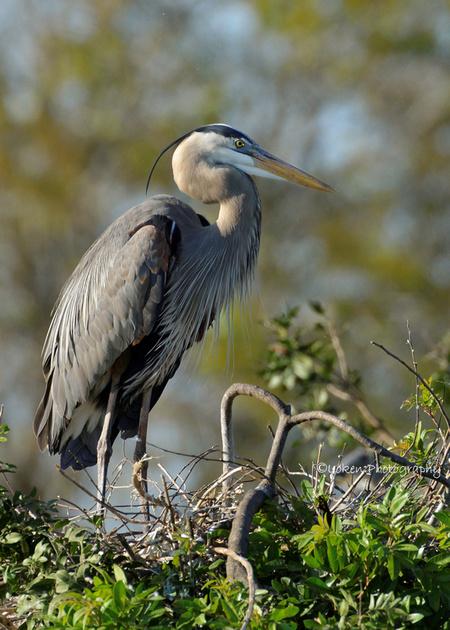 Eric Loken Photography Birds Of Southwest Florida