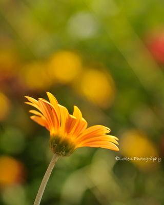 Eric Loken Photography Tony Sweet Fine Art Flower Class